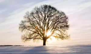 Winter Solstice: Blessings of Love and Light